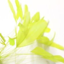 Flo Yellow/Neon Stripped Coque Feathers